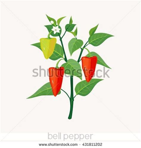 Red and Yellow Bell Peppers Nutrition Facts
